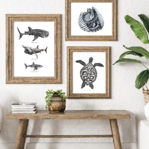 Sea Creature Art Prints