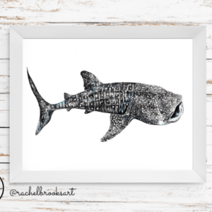 whale-shark-print-rachel-brooks-art