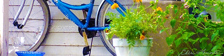 Marigold Blue - Bike
