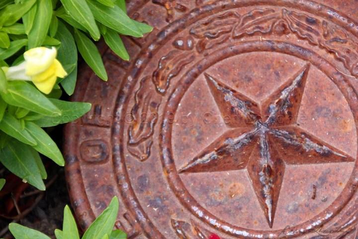 Texas Star in the Garden