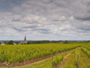 Vineyards around the village of Turquant (Saumur Champigny appellation) - Wine tasting tour in Saumur, France
