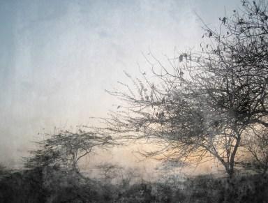 vintage-tree-landscape-background-1013tm-bkg-861