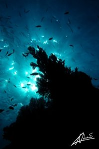 Scuba Diving Phi Phi Islands
