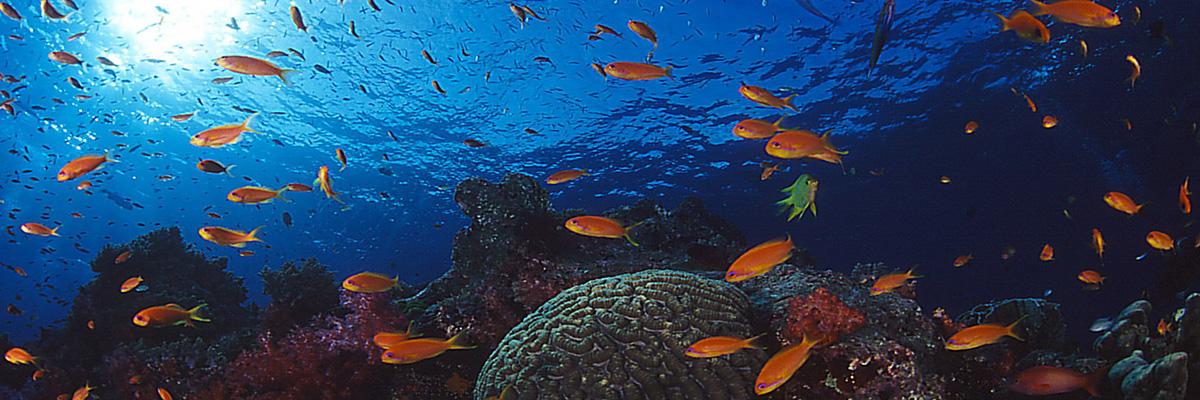 Anitas Reef