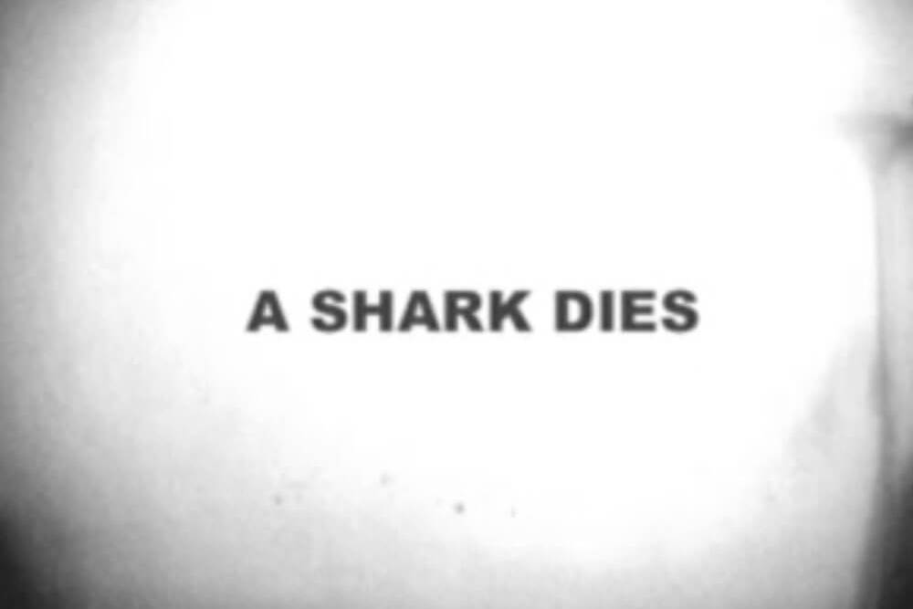 every three minutes a shark dies - sharkproject