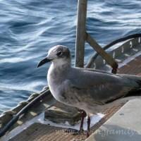 wir segeln richtung malpelo