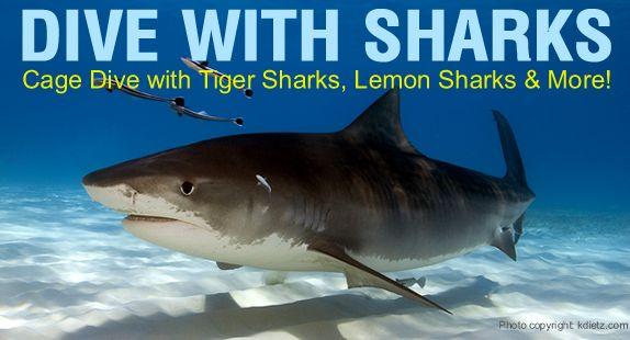 sharks-bahamas-header574