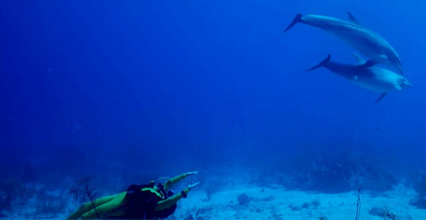 Ilse und die Delfine
