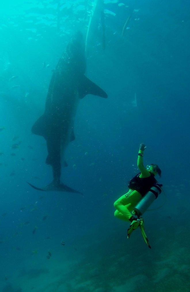 Walhaibegegnung auf den Philippinen