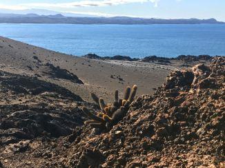 Lava Kaktus