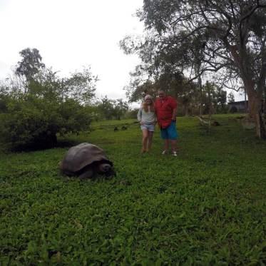 Riesenschildkröten in der El Rancho Manzanillo