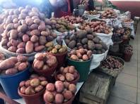 In Ecuador gibt es über 5000 Sorten Kartoffeln!