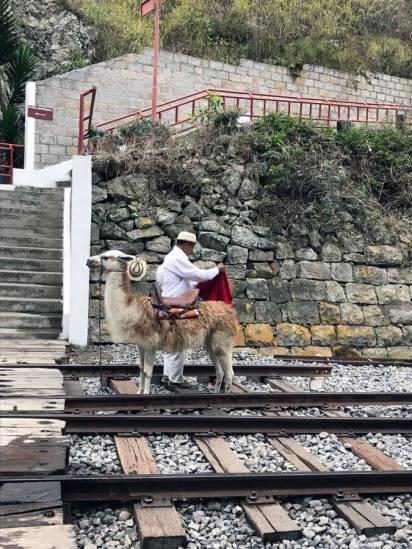 Am Bahnhof in Sibambe werden wir von einem Lama empfangen