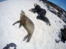 Chillen mit Seelöwen am Strand von Mosquera
