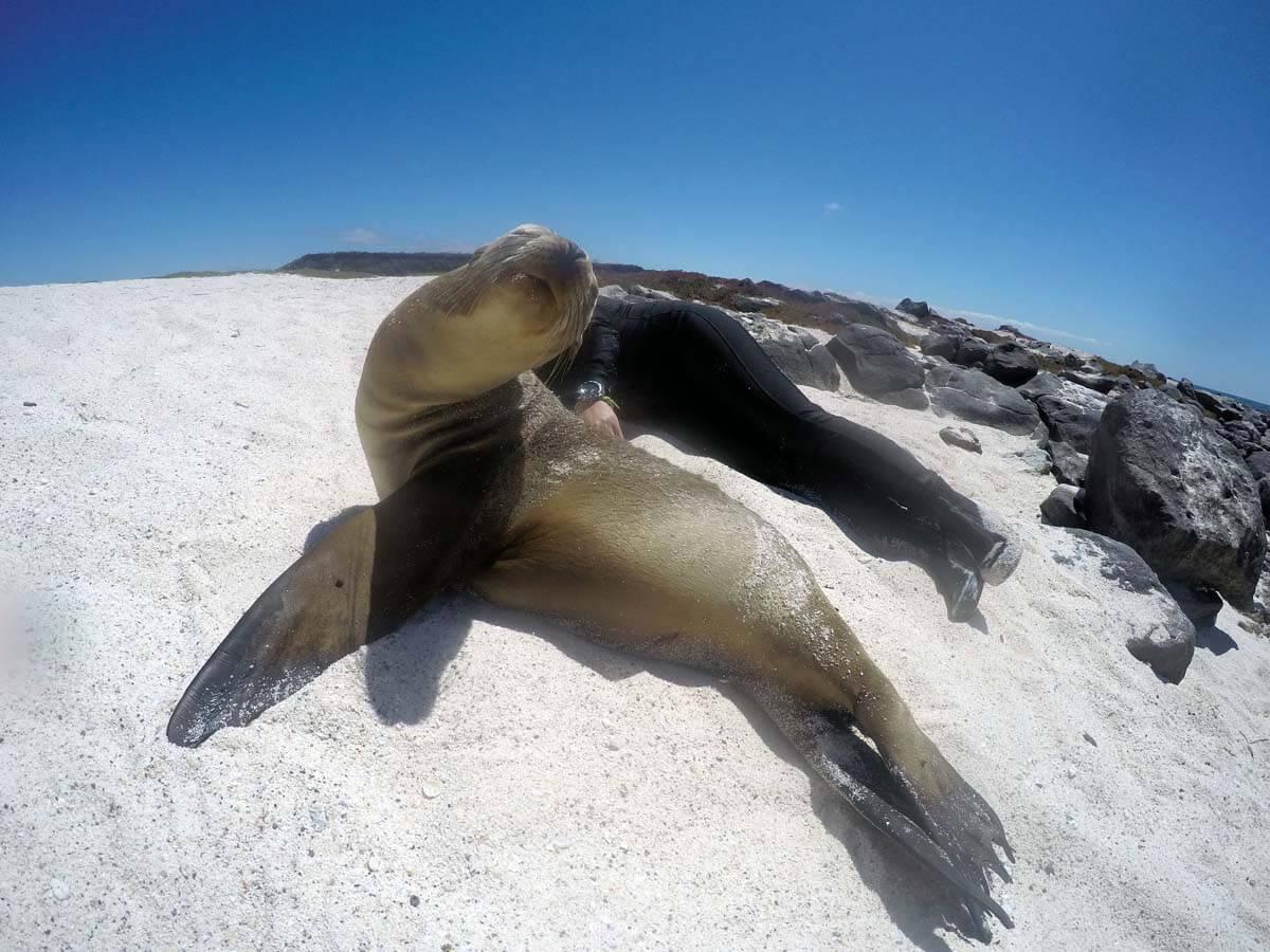 Fregatten-Segeln auf Seymour Island + Yoga-Session auf Mosquera (Galapagos)