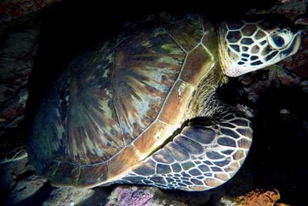 Ich liebe Schildkröten