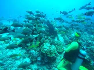 so viele Fische