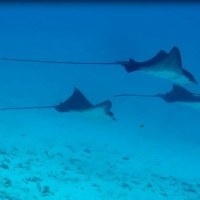 Bora Bora: La Perle du Pacifique