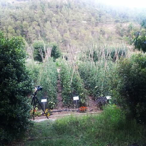 Mon-Sant-Benet-Huerto-Divinos-Sabores WEB
