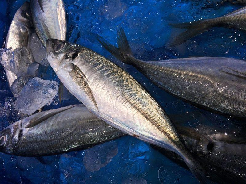 Pescados de descarte