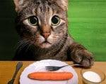 sermao jornada digital gato sermao vegetariano