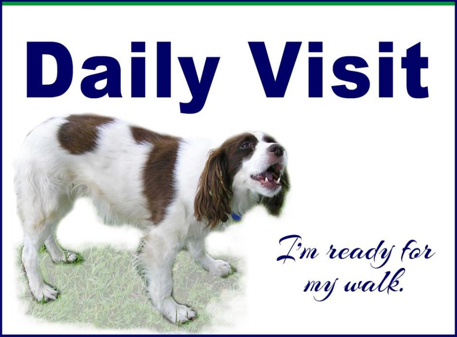 daily-visit