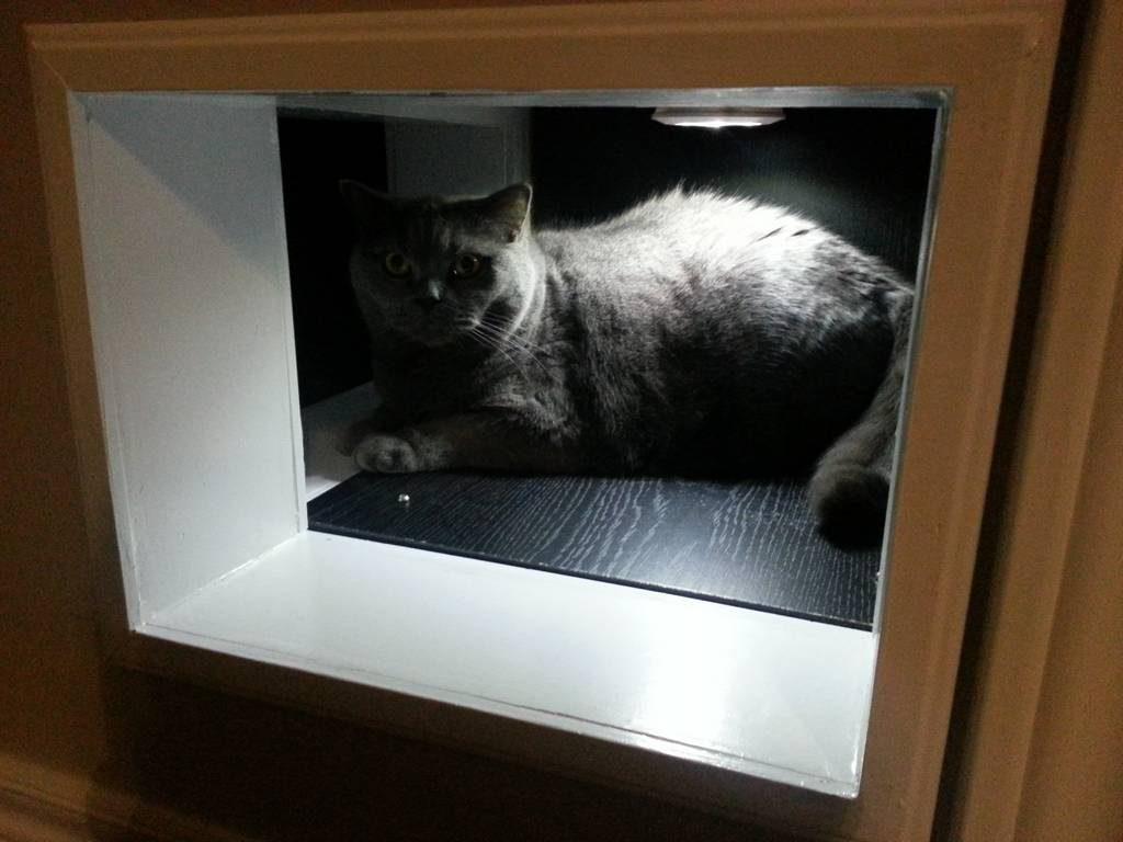 Diy Cat Tunnels Doors Pass Through Bypass Between