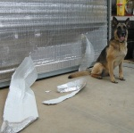 Shepherd vs Roll-up door