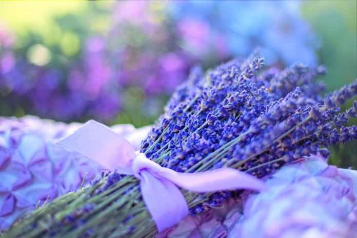 Lavender Health Benefits