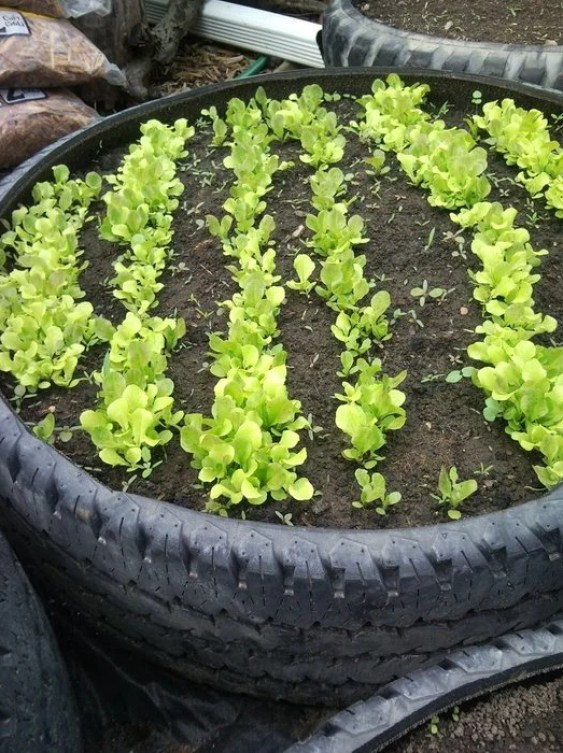 Used Tire Recycled Garden