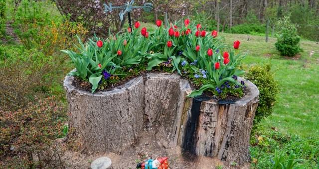 Flower-Plants-Lawn-tree-Stump