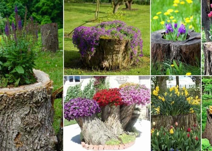 tree-stumps-transformed-into-beautiful-flower-planters