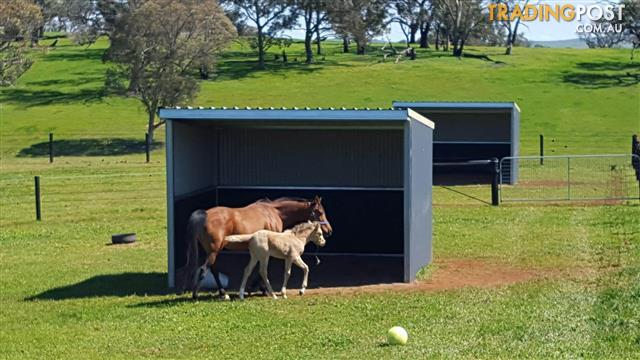 3 Sided Horse Shed