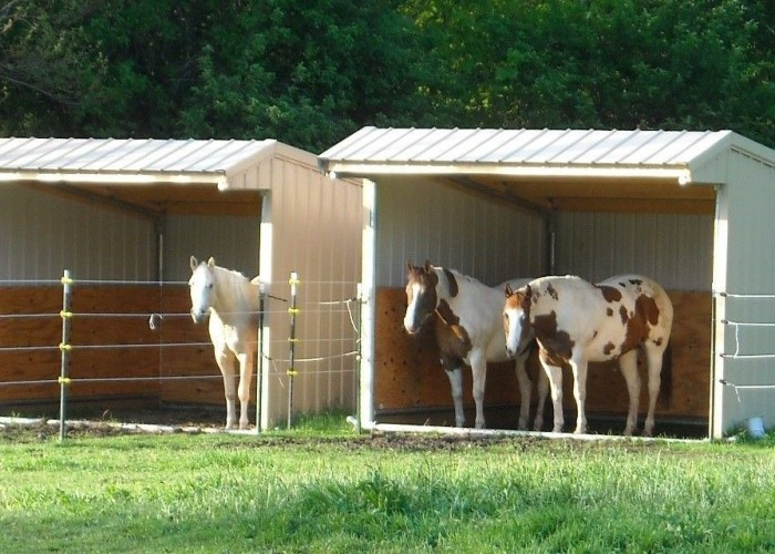3 Sided Shed For Horses