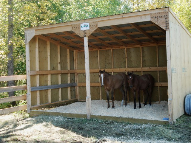Three Sided Shelter for Horse