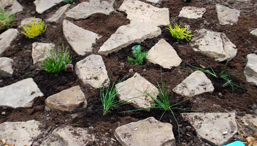 How To Build A Rockery Garden And What To Plant In It Diy Doctor