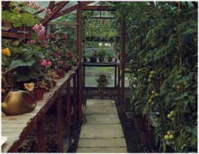 dual purpose greenhouse - growing food crops and ornamental plants