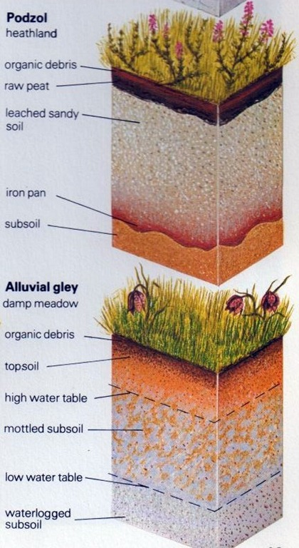 Soil Composition  Understanding Soil   The SelfSufficiency DIY Info Zone