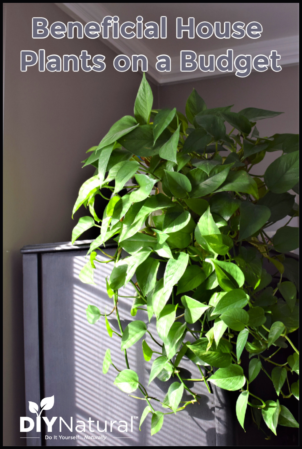 Cheap House Plants 3 Ways To Find Beneficial Indoor Plants On A Budget