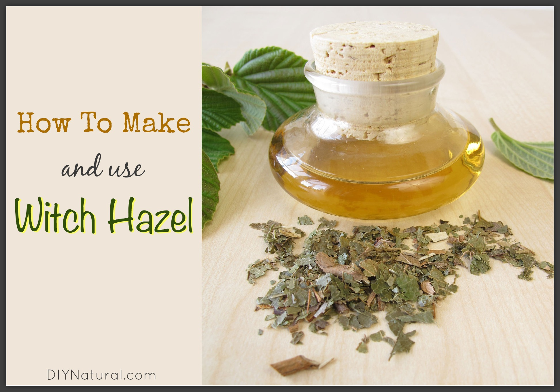 How To Make Witch Hazel And How To Use The Tonic