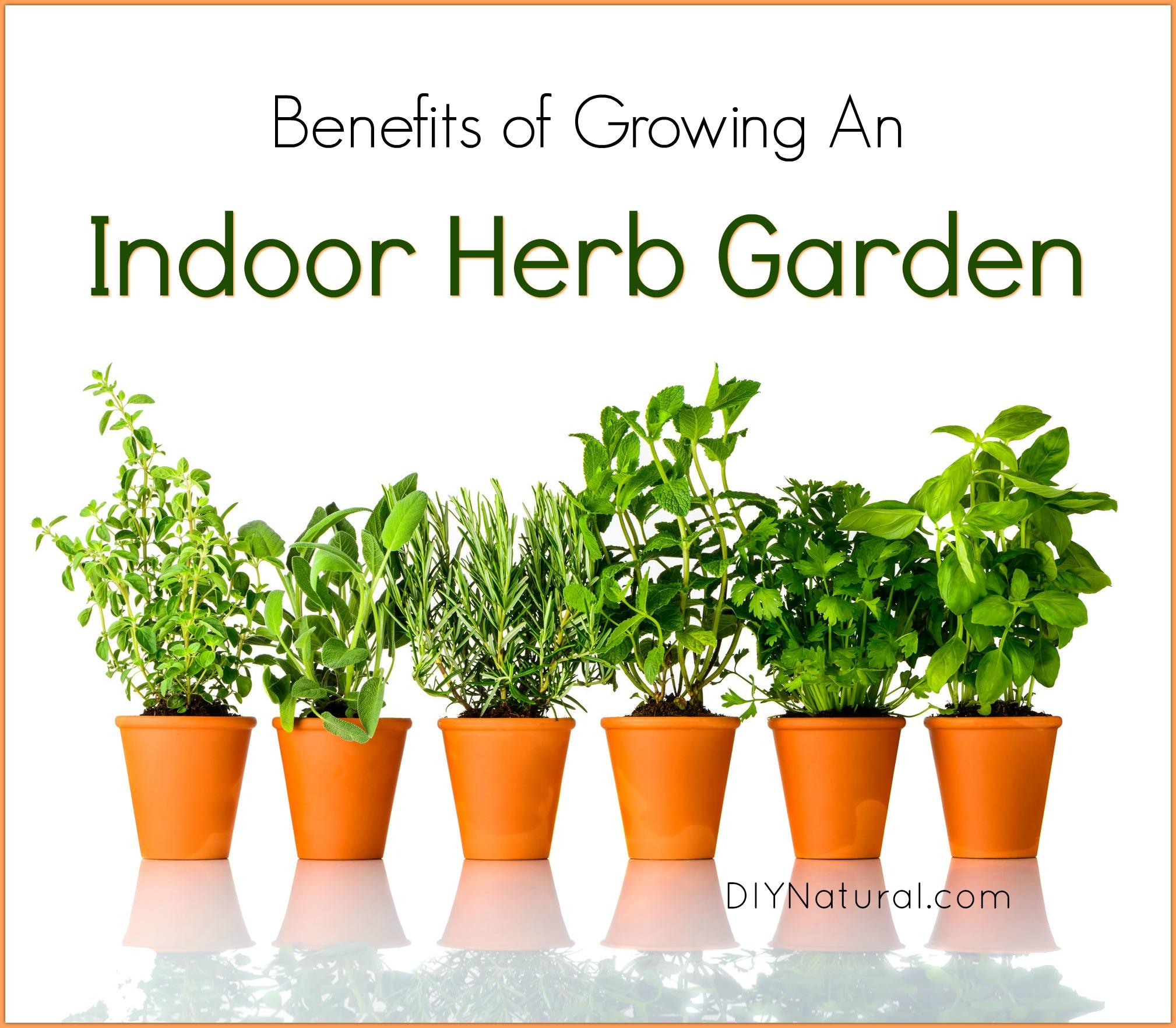 Indoor Herb Garden 5 Reasons You Should Be Growing Herbs Indoors