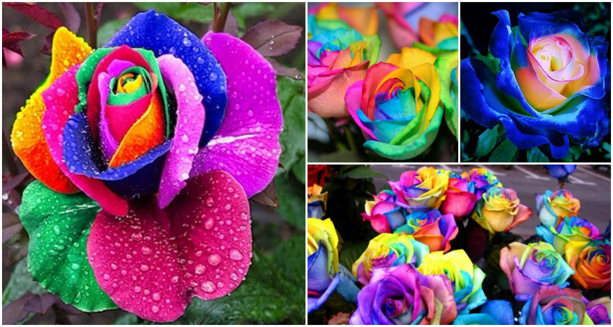 How To DIY Colorful Rainbow Roses Step By Step Video