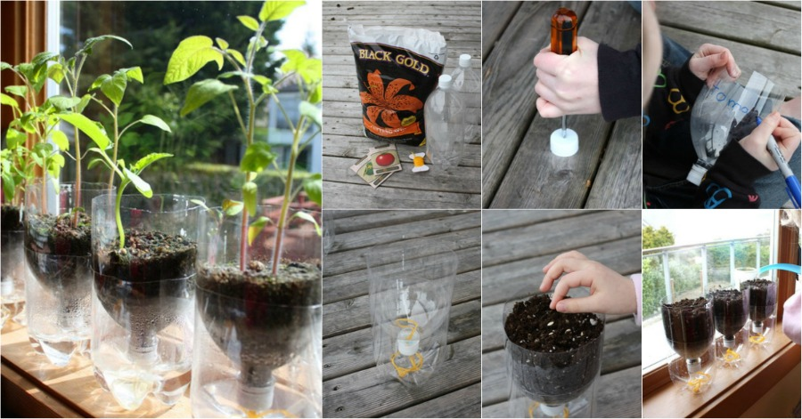 Recycle Plastic Bottles Into Self Watering Seed Starter Pots DIY Amp Crafts