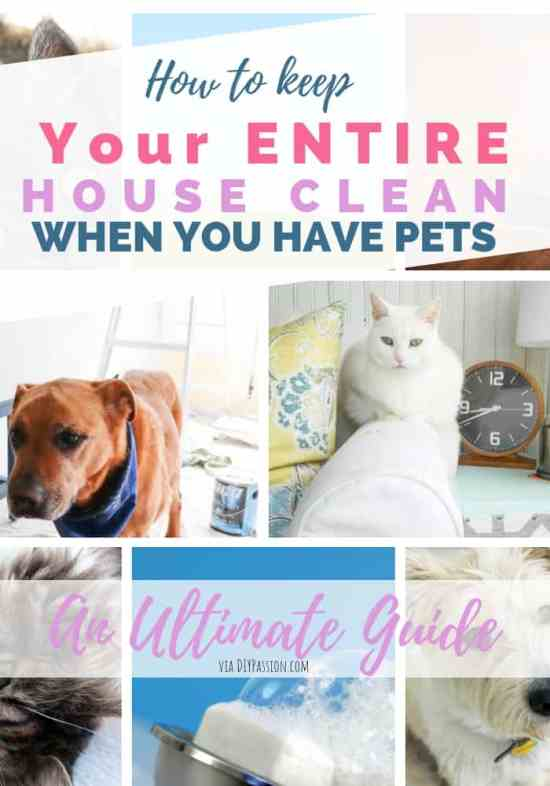 how to clean you house with pets - ultimate guide