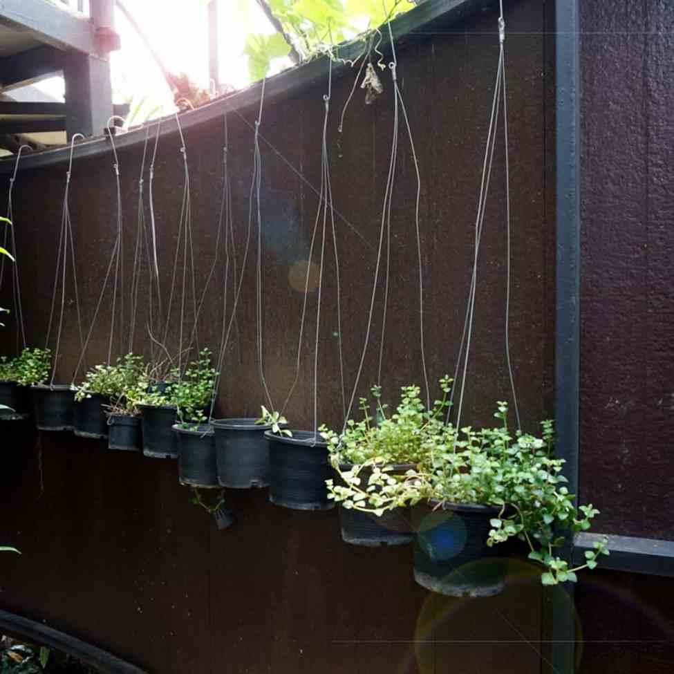 10 Diy Outdoor Plants Ideas