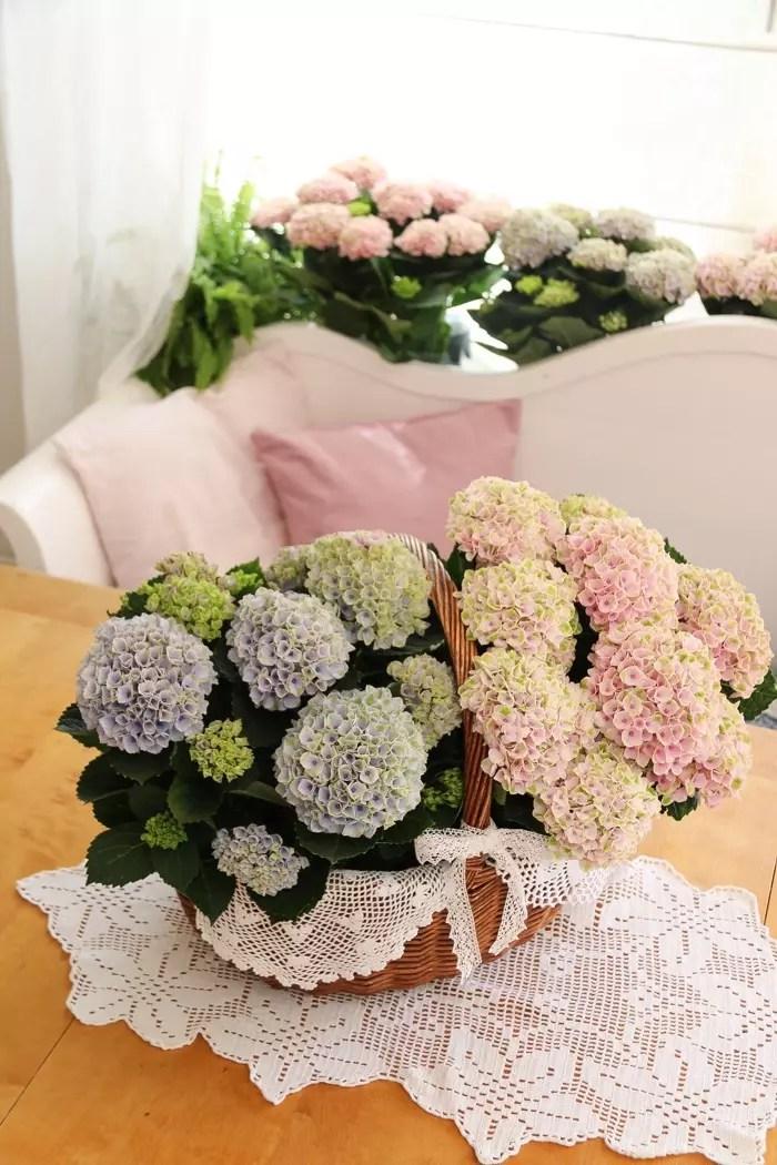 Blomma som gåva