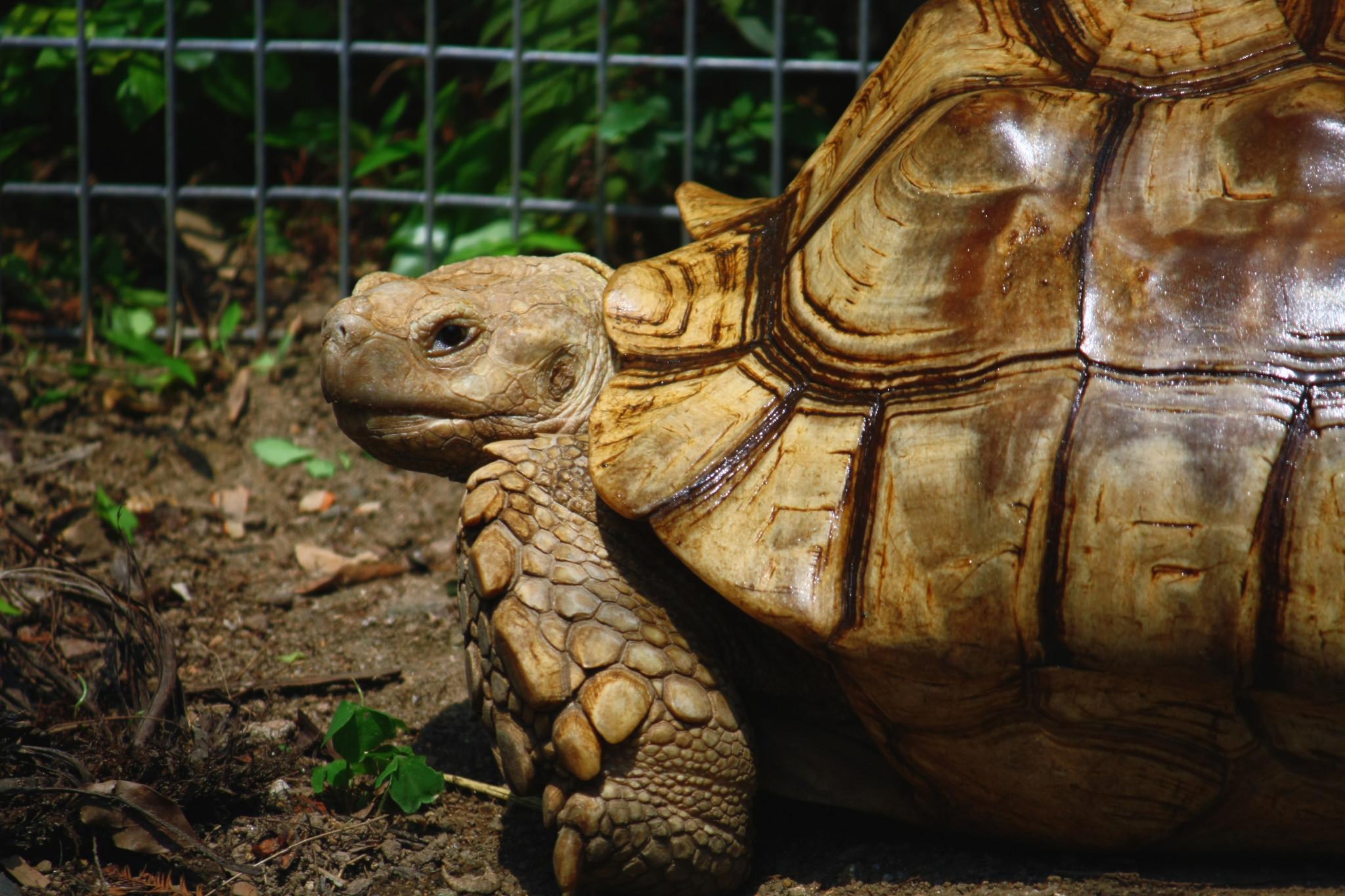 Image result for Tuen Mun Park reptile