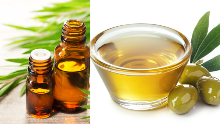Tree Tea and Olive Oil for Head Lice