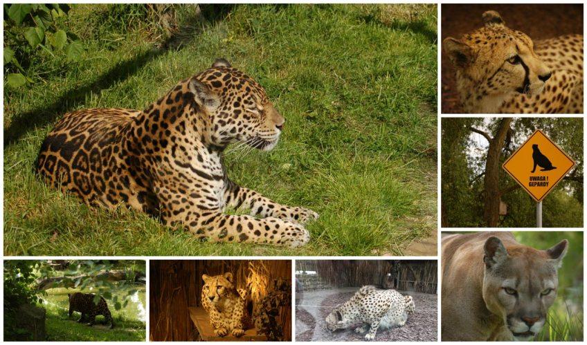 zoo w opolu koty