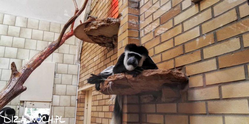 manekin opole zoo